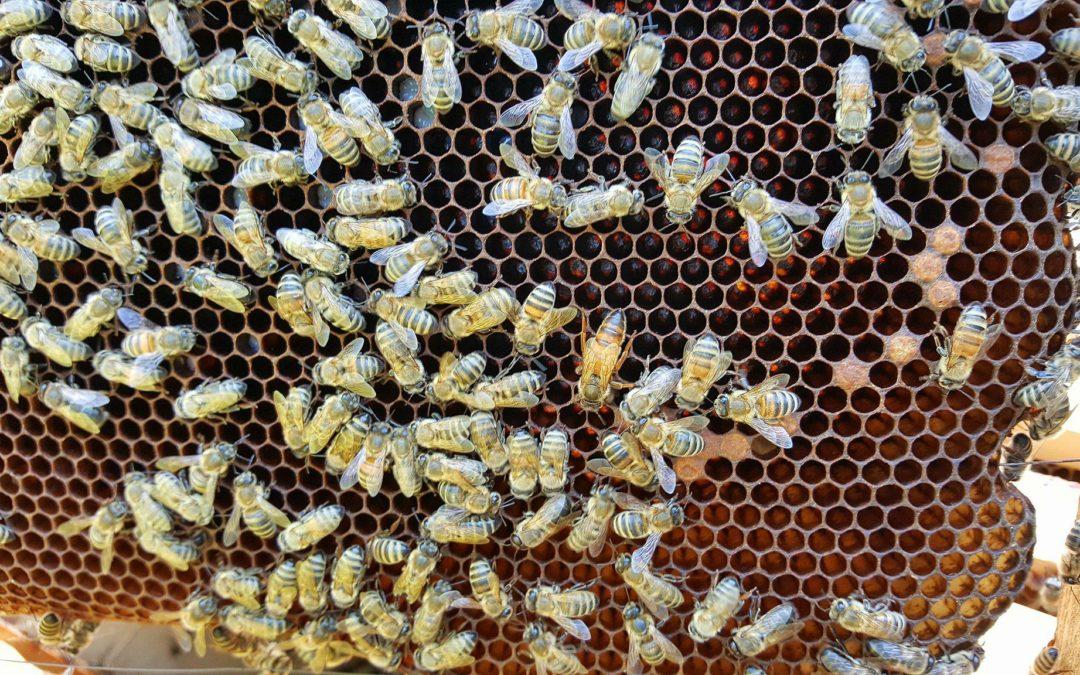 •ApiNutritie – Nutritie cu produse apicole
